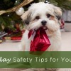 Holiday Safety Tips for Your Pet copy