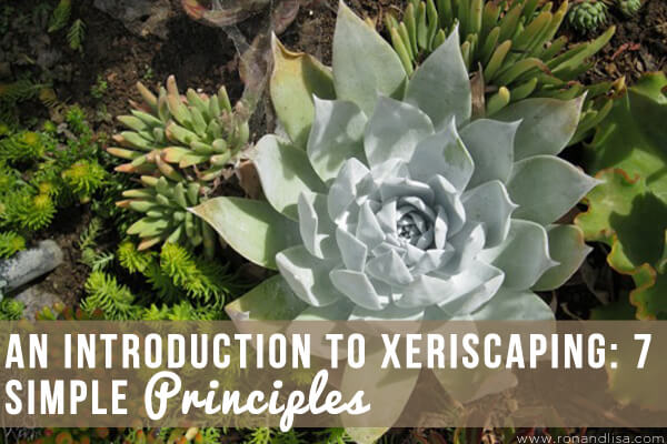 An Introduction to Xeriscaping 7 Simple Principles copy