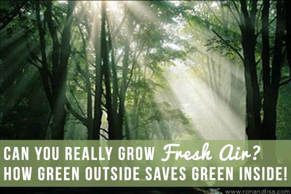 Can You Really Grow Fresh Air How Green Outside Saves Green Inside copy