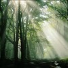 sunlight beaming through forest trees