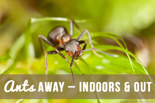 Ants Away – Indoors & Out copy
