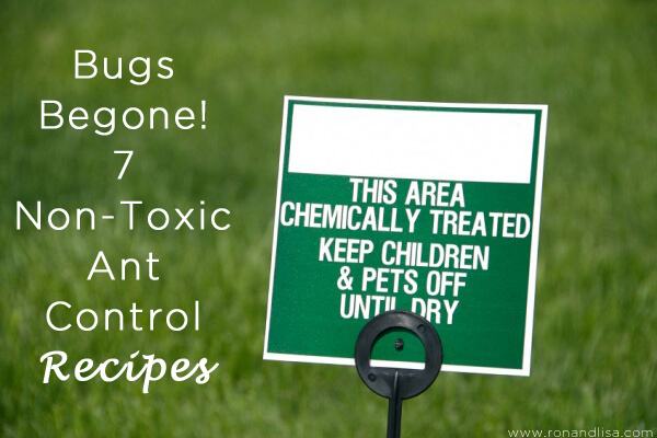 Bugs Begone! 7 Non-Toxic Ant Control Recipes copy