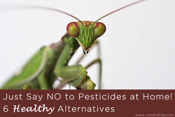 Just Say NO to Pesticides at Home!  6 Healthy Alternatives