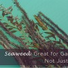 Seaweed Great for Gardens Not Just Sushi
