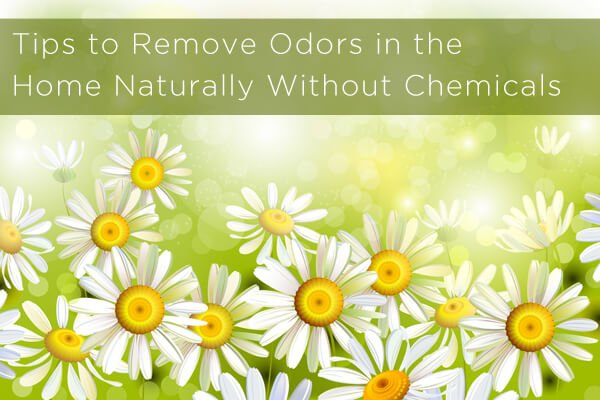 6 tips to remove odors in the home naturally without chemicals