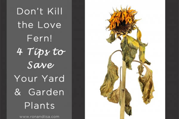 Don't Kill the Love Fern! 4 Tips to Save Your Yard & Garden Plants