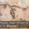 Low Mood, High Mold Is Your House to Blame copy