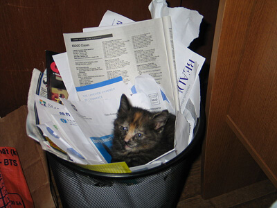 Recycled_kitten1