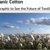 organic cotton feat image
