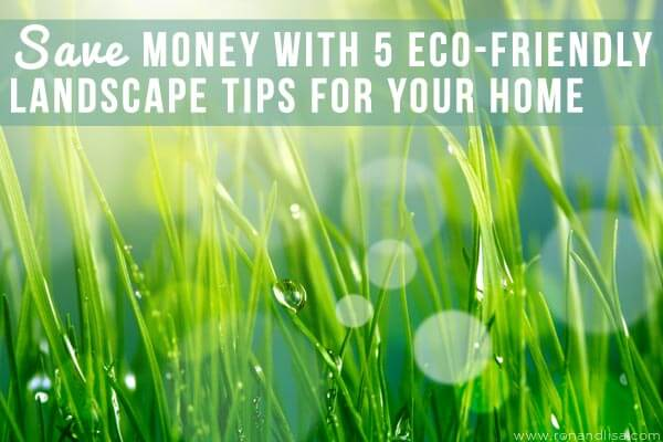 Save Money with 5 Eco-Friendly Landscape Tips for Your Home