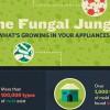 fungal-dangers-infographic-cs2