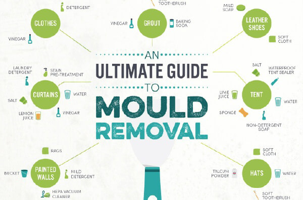 The Ultimate Guide to Natural Mold Removal