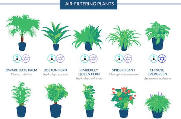 The Top 18 Houseplants for Purifying the Air You Breathe
