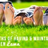 7 MYTHS of Having & Maintaining a Green Lawn