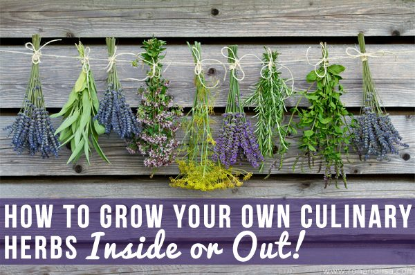 How to Grow Your Own Culinary Herbs Inside or Out!