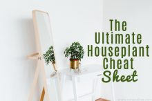 The Ultimate Houseplant Cheat Sheet