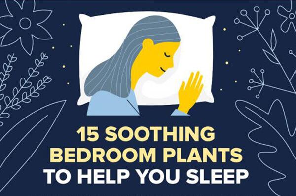 15 Bedroom Plants to Help You Sleep