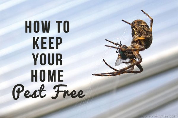 How to Keep Your Home Pest Free