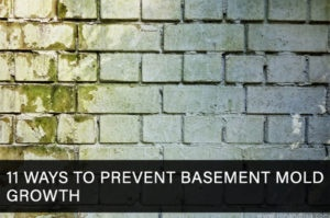 11 Ways to Prevent Basement Mold Growth