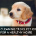 The 5 Cleaning Tasks Pet Owners Need for a Healthy Home